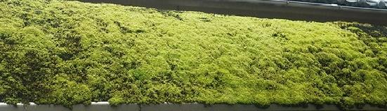 スナゴケ(砂苔)の特性