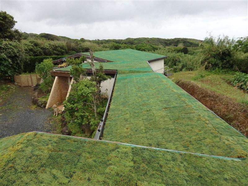 種子島屋根緑化