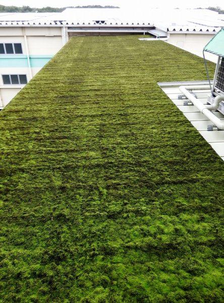 埼玉工場折半屋根緑化