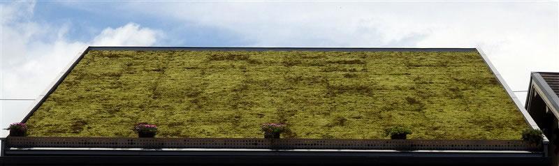 スナゴケ(砂苔)効果スナゴケによる傾斜屋根